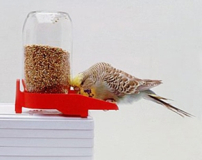 foto alimentacion aves