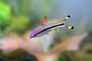 alimentacion peces aguadulce
