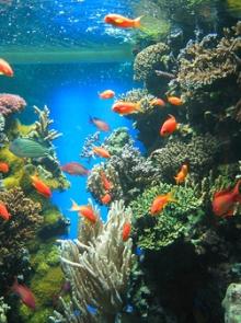 alimentacion peces marinos