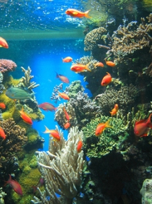 Alimentaci n de los peces marinos mascotapedia for Peces alimentacion