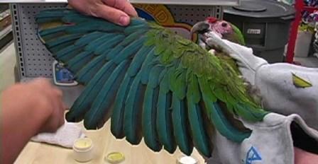 foto consejos cuidar aves