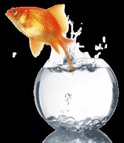 cuidado goldfish