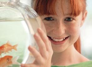Consejos para el cuidado de peces mascotapedia for Cuidado de peces
