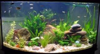 Cu ntos peces puedo poner en mi acuario mascotapedia for Oxigeno de peceras