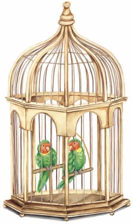 foto jaula aves