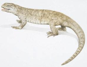 lagarto mascota