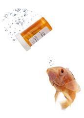 pastillas peces