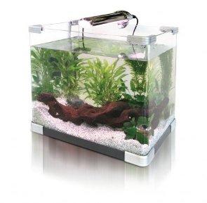 Comprar un nuevo acuario para peces