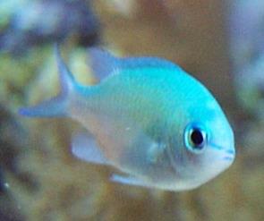 pez hardy