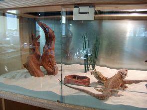 terrario reptil