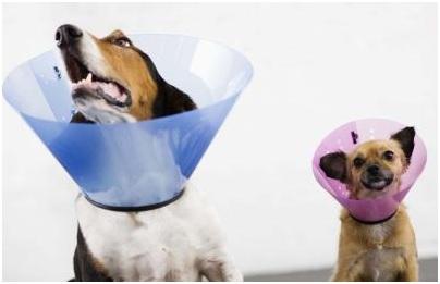 collares mascotas enfermas