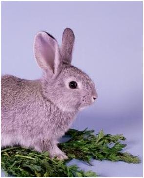 habitat conejo